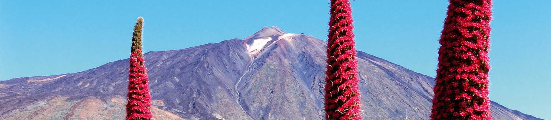 https://www.goodmorningtenerife.com/wp-content/uploads/2014/08/03_slide_teide_GM_Tenerife.jpg