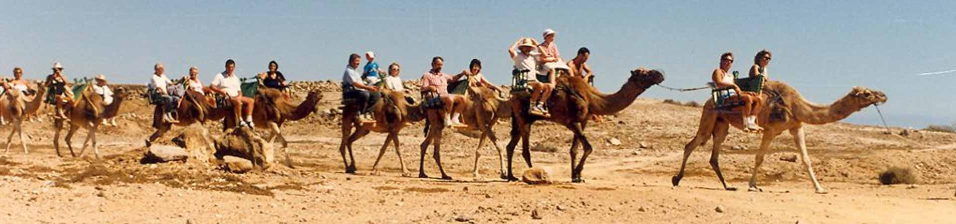 https://www.goodmorningtenerife.com/wp-content/uploads/2015/07/01_slide_camel-park-1920x450-1.jpg