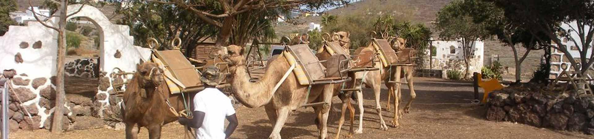 https://www.goodmorningtenerife.com/wp-content/uploads/2015/07/02_slide_camel-park-1920x450-1.jpg