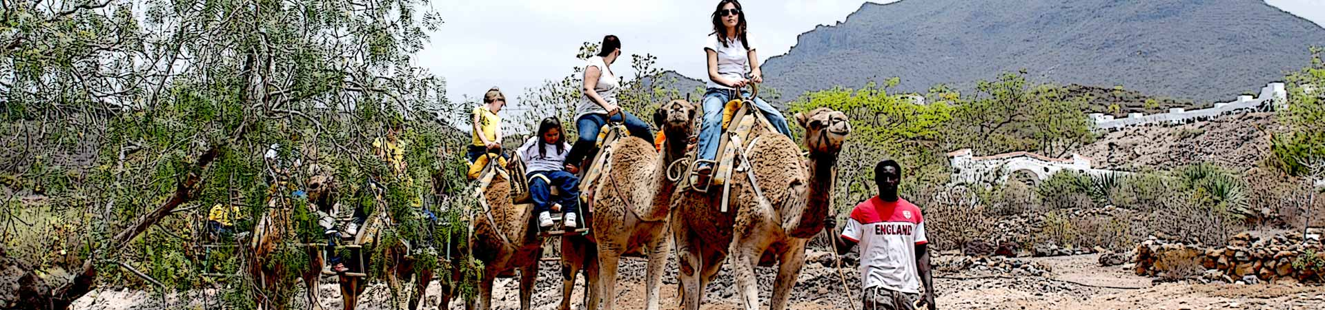https://www.goodmorningtenerife.com/wp-content/uploads/2015/07/03_slide_camel-park-1920x450-1.jpg